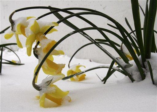 flower/snow