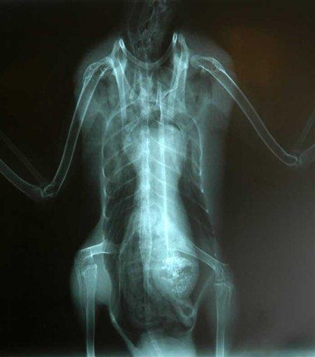 Duck's X-ray shows alien head